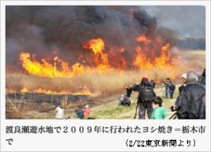 渡良瀬遊水池ヨシ焼きの様子